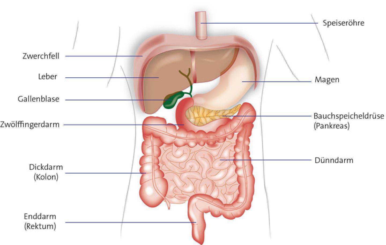 Rechts oder sitzt die links wo bauchspeicheldrüse Lage der
