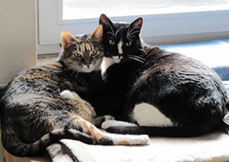 Krebspatienten Mit Tieren Diese Hygienetipps Sind Wichtig